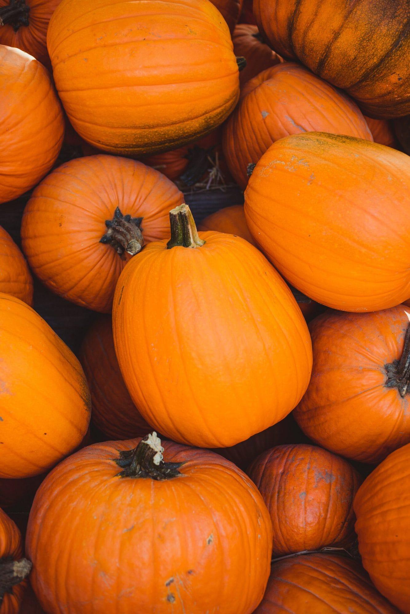 Pile of orange pumpkins waiting to be carved.