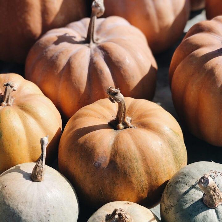 Various colored pumpkins.